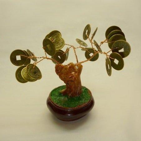 Bonsai moneytree