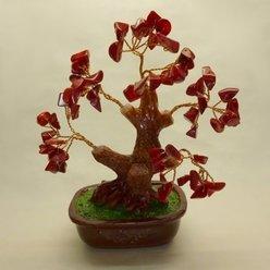 Bonsai corallo (16 cm)