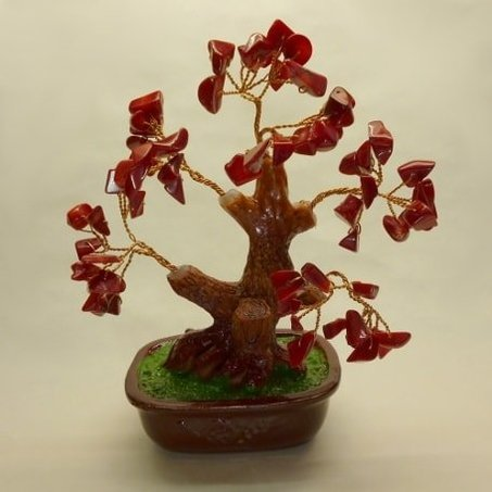 Bonsai corallo